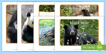 Bears Display Photos - Bears, bear, photo, Display Photos, display, animal, polar bear, grizzly bear, brown bear