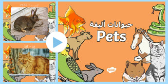Pets Photo PowerPoint Arabic/English - domestic animals, Pets Photo Powerpoint - pets, animals, pets photos, powerpoint, photo powerpoint,