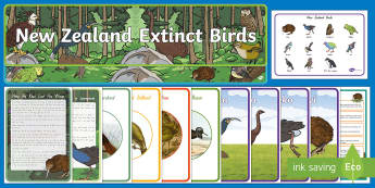 New Zealand Native Birds Display Pack - native birds, animals , new zealand, kiwi, display pack