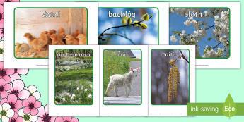 Spring Display Photos - Gaeilge - Aimsir, ROI, seasons, spring, earrach, an t-earrach, display photos, signs of spring, Iris