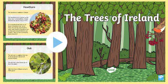 The Trees of Ireland PowerPoint - ROI- National Tree Week 5th - 12th March, trees, ireland, ash, oak, beech, sycamore, horse chestnut,