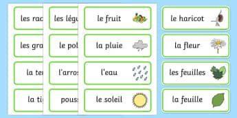 Growth Topic Word Cards French - french, Plant, Growth, Word Card, Topic, Foundation stage, knowledge and understanding of the world, investigation, living things