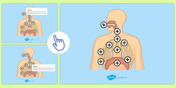 Respiratory System Picture Hotspots - KS3/4 Picture Hotspots, Respiratory System, Breathing, Lungs, science, biology, human body, ks3
