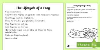 The Lifecycle of a Frog Explanation Writing Sample-Australia - literacy, explanations, writing, text types, types of text, writing sample, year one, year two, stag