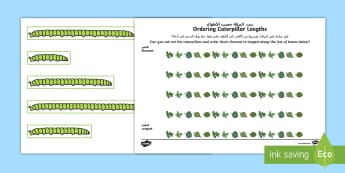 Ordering Caterpillar Lengths Activity Sheet Arabic/English - Ordering Caterpillar Lengths Activity Pack - activity pack, order, lenth, catapillar, catterpillar,