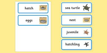 Sea Turtle Life Cycle Word Cards (under the Sea) - ESL Ocean Resources