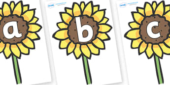 Phoneme Set on Sunflowers - Phoneme set, phonemes, phoneme, Letters and Sounds, DfES, display, Phase 1, Phase 2, Phase 3, Phase 5, Foundation, Literacy