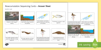 Bioaccumulation Sequencing Cards - Sequencing Cards, gcse, biology, toxin, chemical, DDT, food chain, food chains, bioaccumulation