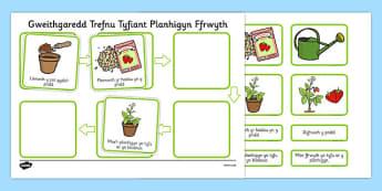 Gweithgaredd Trefnu Tyfiant Planhigyn Cymraeg - welsh, cymraeg, tyfu planhigion, planhigyn, blodau, planhigion, tyfu pethau, plannu