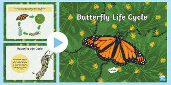 Life Cycle of a Butterfly PowerPoint - USA Early Childhood Science: Life Cycles, butterfly life cycle, butterfly power point, life cycle po