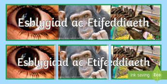 Baner Arddangosfa Esblygiad ac Etifeddiaeth - baner arddangosfa, Cymraeg, gwyddoniaeth, esblygiad, etifeddiaeth, bodau dynol, anifeiliaid,amgylche