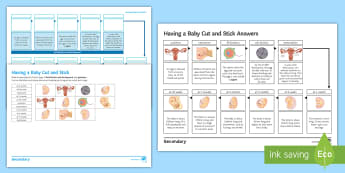 Having a Baby Cut and Stick Activity Sheet - Cut and Stick, reproduction, human reproduction, babies, baby, gestation, fertilisation, embryo, emb