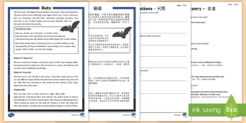 Bats Reading Comprehension Activity English/Mandarin Chinese - Bats Reading Comprehension - bats, reading, comprehension, read, comprehesion, comprehnsion, reading
