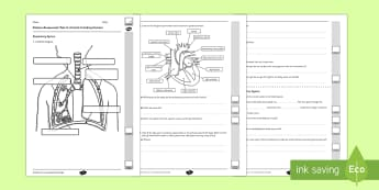 Y6 Animals Including Humans End of Unit Assessment - circulatory system, heart, lungs, blood vessels, arteries, veins, capillaries, oxygen, carbon dioxide, exercise, drugs, alcohol, acids, chyme, nutrients, protein, enzymes, villi, villus, intestine,