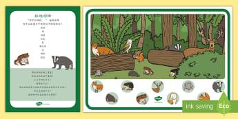 林地动物-海报及练习卡片 - 森林,山地,动物,狐狸,獾,璐,鼠,松鼠。