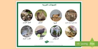ملصق الحيوانات العربية  - علوم، كائنات حية، حيوانات، الإمارات، حيوانات عربية، ص