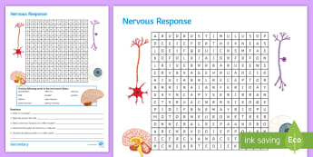 KS4 Nervous Response Word Search - stimulus, synapse, effector, sensory neurone, reflex