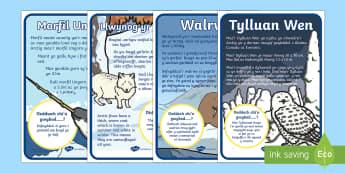 Posteri Arddangos Anifeiliaid yr Arctig - Morfil Ungorn, Walrws, Walrysiaid, ysgithr, ysgithrau, Ysgyfarnog yr Arctig, Tylluan Wen, Arth Wen,