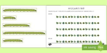 Ordering Caterpillar Lengths Activity Pack English/Mandarin Chinese - Ordering Caterpillar Lengths Activity Pack - activity pack, order, lenth, catapillar, catterpillar,