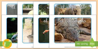 Fotos de exposición: Los animales salvajes - animales, salvaje, animal, cocodrilo, canguro, mono, oso, polar, panda, jirafa, elefante, rinoceront