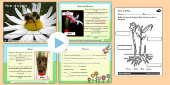 Parts of a Plant - parts of a plant, pack, plant, differentiated