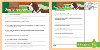 Dog Quiz Cards - reminiscence, pets, ideas, support, Pets as Therapy, Communication, quiz, dog, dogs