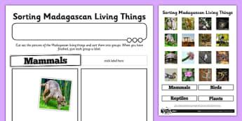 Sorting Madagascan Living Things Activity Sheet - living things, habitats, conservation, Madagascar, deforestation, rainforest, endangered, extinct, worksheet