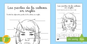 Ficha de actividad: Las partes de la cabeza en inglés - English, human body, the body, anatomía, anatomy,Spanish