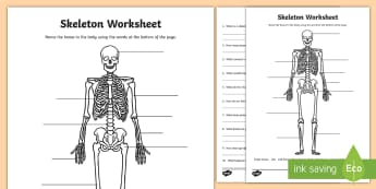 Skeleton Worksheet - skeleton, the human skeleton, our bodies, skeleton worksheet, bones, human bones worksheet (Common Names), skeleton labelling worksheet, ks2