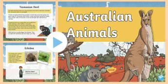 Australian Animals PowerPoint - Literacy, australian animals, factfile, information, diet, habitat, Australia, animals, reading, com
