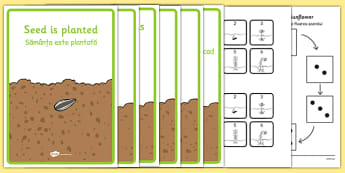 Life Cycle of a Sunflower Sequencing Activity Pack Romanian Translation - romanian, EYFS, Early Years, plants and growth, Understanding the World