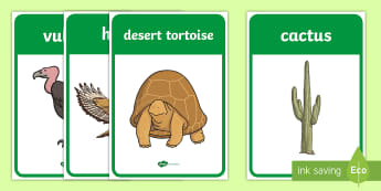 Desert Habitat Display Posters - desert, desert habitat, desert animals, habitats, display posters, desert display posters, desert ha