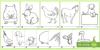 Pets Colouring Sheets - Pets, pet, xmas, colouring, fine motor skills, poster, worksheet, cat, dog, rabbit, mouse, guinea pig, rat, hamster, gerbil, horse, puppy, kitten, snake, chinchilla, snail, lizard, budgie