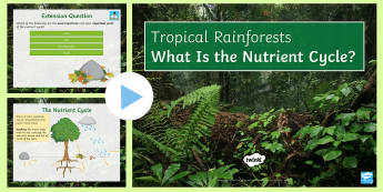 The Nutrient Cycle PowerPoint - nutrients, rainforests, ecosystems, decomposers, cycle