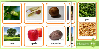 Seeds and Plants Matching Cards - the tiny seed, display, nature, science, labels, plants, life cycle, visual aid,