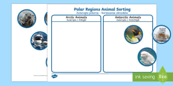 Polar Regions Animal Sorting Activity English/Polish - The Arctic, Polar Regions, north pole, south pole, explorers, orca, whale, penguin, polar bear, anta