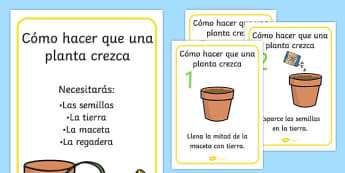 Cómo hacer que una planta crezca - spanish, Plant, Growth, Topic, Foundation stage, Flower, knowledge and understanding of the world, investigation, living things, labelling, labelling plant