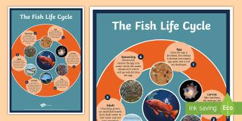 Fish Life Cycle A4 Display Poster - Fish Life Cycle Display Poster - life cycles, animal, poster, lfe cycles