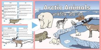 Winter Arctic Animals Habitat PowerPoint English/Hindi - power point, interactive, presentation, winter, arctic animals, fur, sea life, arctic life, food, pr