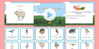 食肉动物和食草动物课程集 - 食肉动物,食草动物,杂食动物,动物,分类练习