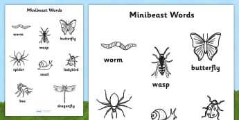 Minibeast Words Colouring Sheet - minibeasts, colour, colouring