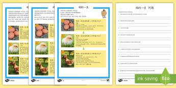 鸡的一生阅读理解 - 动物,鸡,公鸡,母鸡,孵化,鸡的生命周期,生命周期
