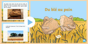 Powerpoint : Du blé au pain - La moisson, cycle 1, cycle 2, KS1, Harvest,blé, wheat, graines, semis, pain, bread,French