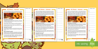 Autumn Differentiated Reading Comprehension Activity Sheet Pack - autumn comprehension, pack, worksheet