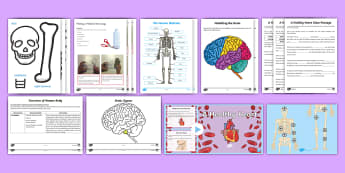 Human Body First Level Activity Station Lesson Pack - CfE, curriculum for excellence, Science, human body, my body, the brain, the heart, skeleton, bones,