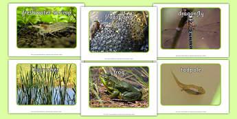 Pond Life Display Photos - pond dipping, pond life, display photos, display, photos