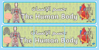 The Human Body Display Banner Arabic/English - The Human Body Display Banner - ourselves, body, science, header, sceince, oursleves, ourselvs, abnn