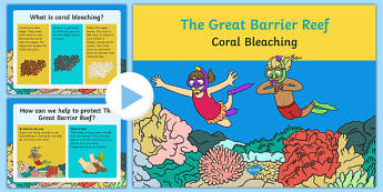 Coral Bleaching Information PowerPoint - australia, coral bleaching, great barrier reef, information, powerpoint