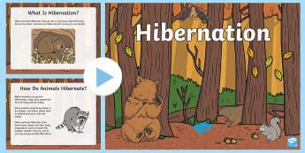 Hibernation PowerPoint - Fall, hibernation, Bears, bats, Seasons, Winter,