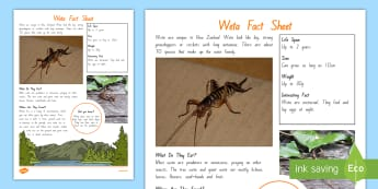 Weta Fact File - New Zealand, minibeasts, insects, bugs, minibeast, year 1, year 2, year 3, science, nature, living w